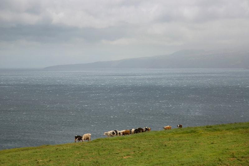 carne biologica Azores Meet Bio